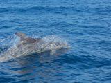 culatra tours, dauphins